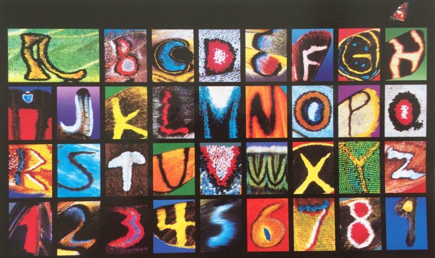 Schmetterlingsbuchstaben
